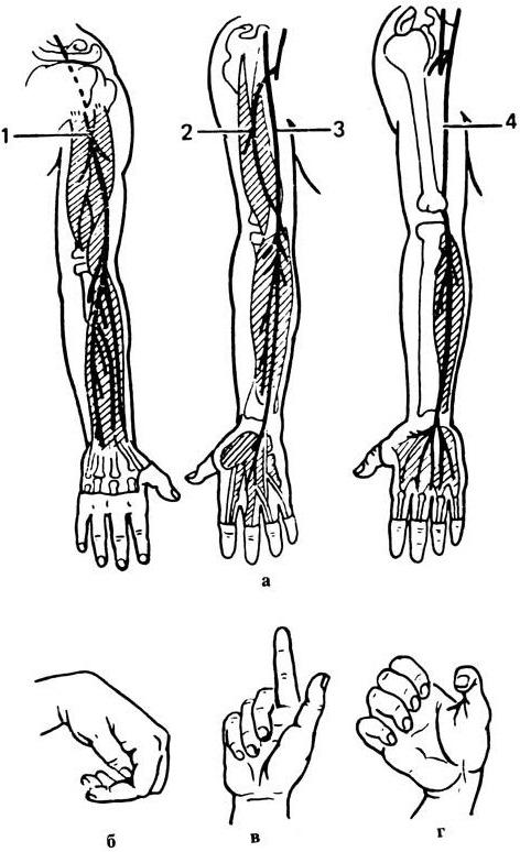Массаж плечевого сустава при артрозе, боли и вывихе: фото, видео