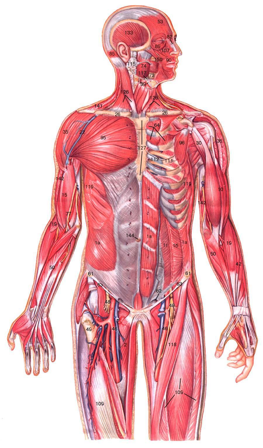 Массаж для мышц живота